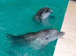 Дельфін уві сні для жінки