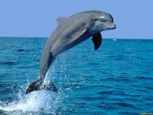 Дельфін уві сні до вагітності