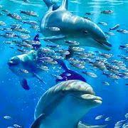Дельфін уві сні бачити