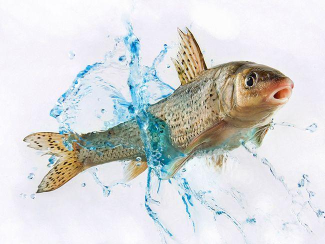 Є рибу уві сні до чого