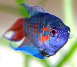 Голова риби уві сні