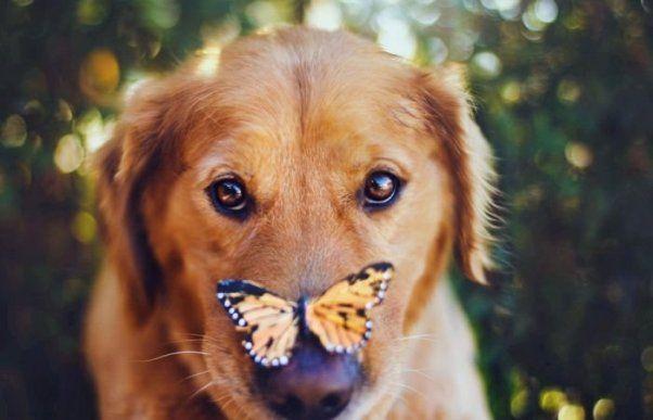 Від образи на батьків до «собаки краще, ніж люди»