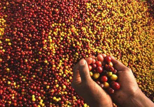 Родина кави - ефіопія