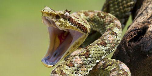 Змія вкусила уві сні дитини